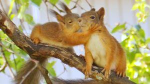 Pussailevat oravat
