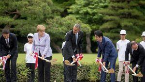 Italian pääministeri Matteo Renzi, Saksan liittokansleri Angela Merkel, hdysvaltain presidentti Barack Obama, Japanin pääministeri Shinzo Abe ja Ranskan presidentti François Hollande  aloittivat G7-kokouksen istuttamalla puita.
