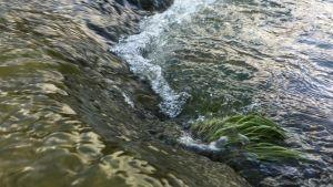 Vesipyörre joen rannassa.