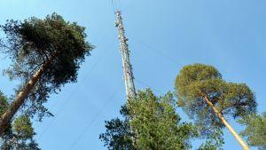 Masto on lähes 100 metriä korkea.