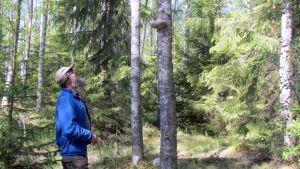 Maanomistaja Eero Laukkanen tutkailee luonnonsuojelualueen metsää Kalajoen Metsäperällä.