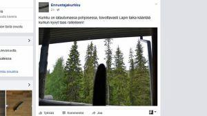 kuvakaappaus Ennustajakurkun Facebookista