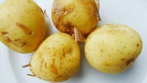 Uutta perunaa.