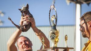 Vuoden 2016 Maailman rumin koira -kilpailun voitti koira nimeltä Sweepee Rambo, Kaliforniassa 24 kesäkuuta.