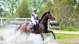 hevonen vesiesteellä