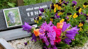 lappeenrannan eläinsuojeluyhdistyksen lemmikkien hautausmaa