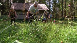 Talkoolaiset niittävät heinää.