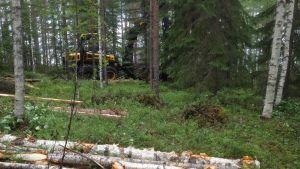 Kaadettuja puita ja metsätyökone metsässä