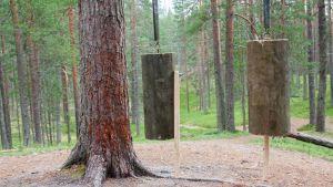 Paalutribula Suomussamen Soivassa metsässä.