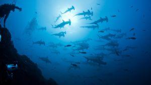 Revilla Gigedon saaret Tyynellä valtamerellä.