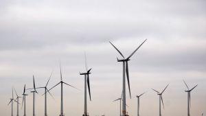Vattenfallin Lillgrundin tuulivoimala Ruotsissa.