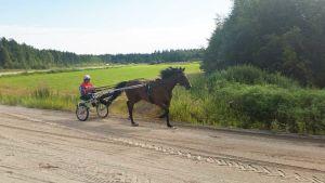 Mauri Jaara treenaa Flourlake's Benjamia Ruukin hevoskekuksen harjoitusradalla Siikajoella 29.7.2016.