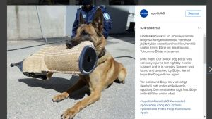 Itä-Uudenmaan poliisikoirien Instagram-tilillä julkaistu kuva Börjestä.
