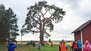 Tervapatikoijat pysähtyivät Ahmasjärven rannalle hämmästelemään hirsipuuta 1600-luvun noitavainojen ajalta.
