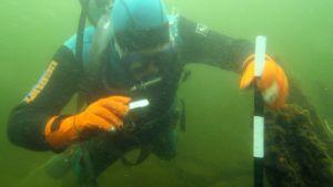 Sukeltaja tutkii muinaisjäännöstä Tohmajärven Salmilammessa.