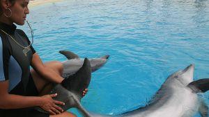 kouluttaja ja delfiini altaan reunalla