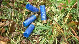 Vesilintujahdissa olleiden metsästäjien jäljiltä löytyneitä tyhjiä lyijyhaulihylsyjä.
