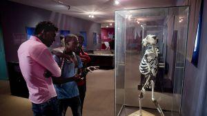 Lucyn luurangon jäljennös museossa Addis Abebassa, Etiopiassa 20. maaliskuuta 2016.