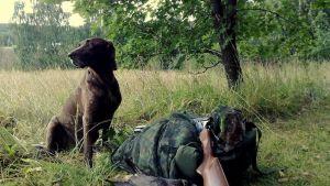 Koira istuu saalislinnun vieressä.