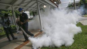 Singaporessa myrkytetään kiivaasti hyttysiä sen jälkeen, kun ensimmäiset kotoperäiset zikavirustartunnat todettiin viime sunnuntaina.