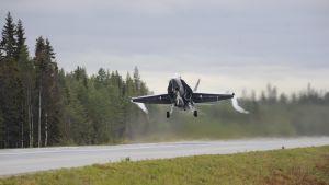 Hornet laskeutumassa tielle, jota reunustaa metsä.