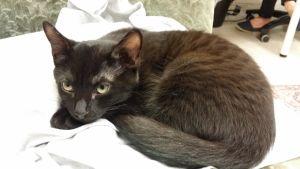 Musta kissa makaa nojatuolissa.
