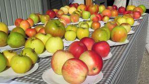 Lohjansaaren Fruticetumissa on esillä 30 perinneomenalajiketta sekä 300 muuta omenalajia.
