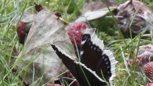 perhonen lehdellä