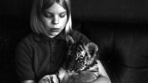 Martta-tiikeri näyttää viihtyvän nuoren Minna Koiviston sylissä.