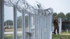 Unkarilainen sotilas partisosa etelärajalla lähellä Serbiaa.