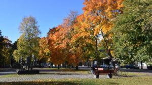 Syksyinen puisto Porissa.