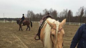 Lännenratsastuksessa käytettäviä hevosia.