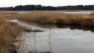 Pielisjoen syksyistä rantamaisemaa Kontiolahden Kupluskylän kohdalla.