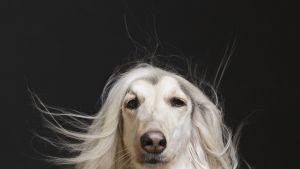 Valokuvaaja Maija Astikainen kuvasi koiria ihmismäisesti One-Dog Policy -kirjaansa varten.