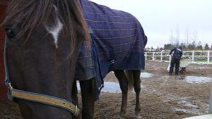 Hevonen lanta Jokimaa Lahti