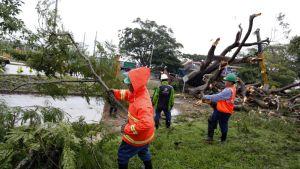 Pelastustyöntekijät siirtävät kaatuneita puita.