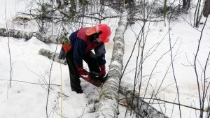 Metsuri kaataa puuta talvisessa metsässä.