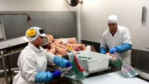 Työntekijät pakkaavat joulukinkkuja pusseihin.