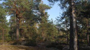 Helsingin kiinteistölautakuntaan tulleen esityksen mukaan kaupunki myisi muun muassa tämän Kauhalan 248 hehtaarin metsäalueen, joka sijaitsee Kirkkonummella. Suomen luonnonsuojeluliiton mukaan Kauhalan ulkoilualueen luontoarvo on niin arvokas, että se pitäisi saada suojeluun.