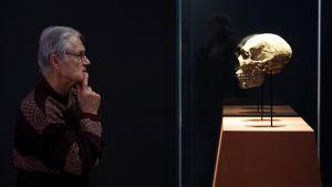 Amud-luolasta Israelista löydetty neandertalilaisen pääkallo esillä saksalaismuseossa Bonnissa marraskuussa 2016.