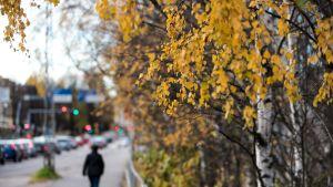 Ihminen kävelee yksin jalkakäytävällä syksyllä.