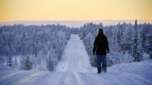 Jalankulkija lumisella metsätiellä Muoniossa.