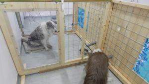 Kaksi puuraamista verkkohäkkiä, joissa on koira.