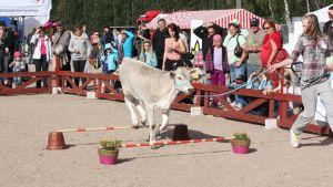 Pellon maaseutunäyttely järjestettiin edellisen kerran kolme vuotta sitten.