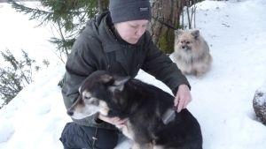 Mari Wikholm harjaa Tilhi-koiraansa.