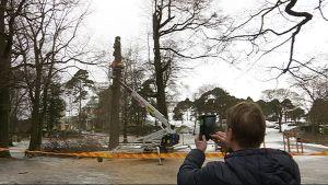 Petri Suhonen tuli seuraamaan puiden kaatamista Kotkassa.