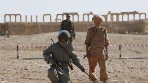 sotilaita miinanraivauksessa palmyrassa