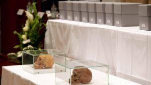 Kaksi pääkalloa lasilaatikoissa pöydän päällä, takana harmaita laatikoita toisen pöydän päällä.