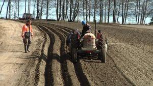 Traktori istutuspuuhissa perunapellolla.