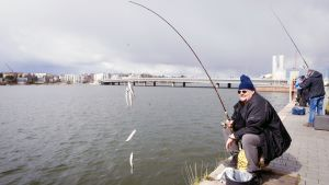Silakan pyytäjiä Ruoholahden rannassa Helsingissä.
